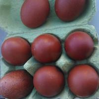 Marans Bruteier schwarz kupfer bruteier hühner braune eier