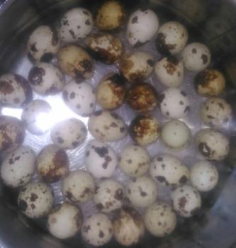 Frage: Wie kann man gekochte Wachteleier am besten schälen? wachteleier schälen kochen Wachteleier im Kochtopf