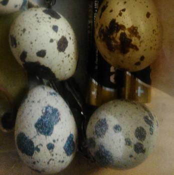 Über den Nährwert der Wachteleier - Sind Wachteleier gesünder als Hühnereier? wachtelei nährwert wachteleier Wachteleier - Jede Wachtel macht ihren individuellen Stempel auf das Ei