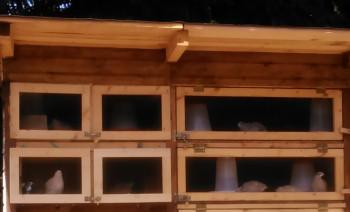 Wachtelstall selbst gebaut: Türen oder Klappen am Wachtelstall? wachtelstall selber bauen türen klappen magnetschnapper magnetschnäpper drahtüberfalle Experimentalbau: Wachtelstall mit Türen und Klappen