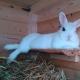 Statement zu den derzeit grassierenden Tierseuchen: Kaninchensterben, Geflügelsterben usw.